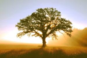 albero-con-luce
